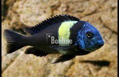 Продажа аквариумных рыбок в интернет магазине Fishmack