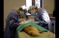 Ветеринар на дом Харьков.068 745 92 35