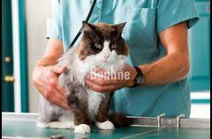 Ветеринар на дом 068 7459235