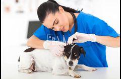 Ветеринар на дом 068 7459235 ветклиника
