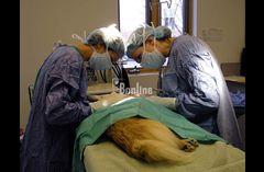 Ветеринарная клиника 068 745 9235,вызов ветеринара на дом