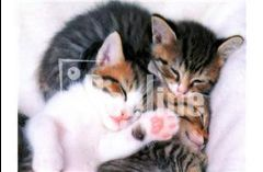 Кастрация котов, стерилизация кошек 093-408-09-36